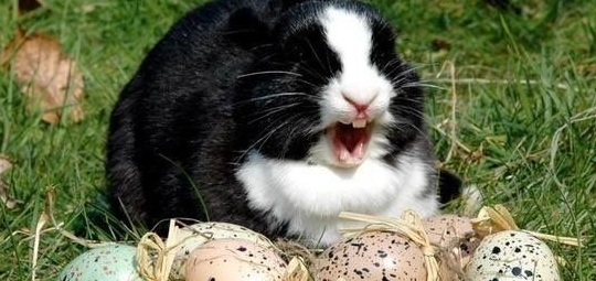 funny bunny pictures
