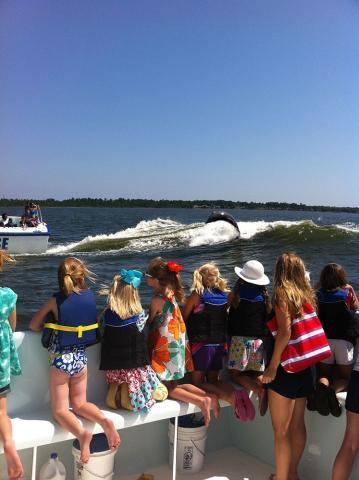 enjoy-a-dolphin-cruise-in-orange-beach-and-gulf-shore