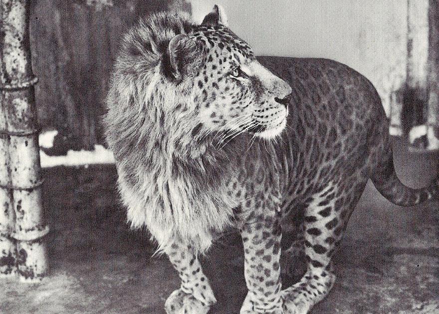 hybrid animals