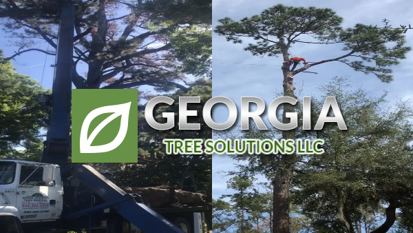 georgia tree solutions now uses a crane to remove trees in savannah ga