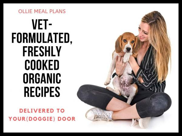 get the best human grade low calorie organic dog food delivered to your door