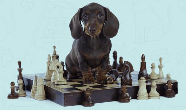 get the best ky lexington home dog training amp intelligence based smart program