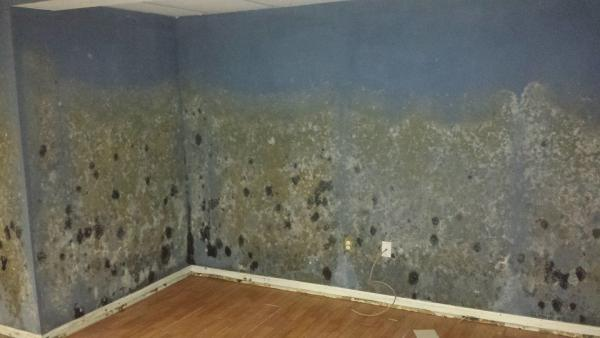 get the best mold removal expert services for homes amp businesses in new jersey
