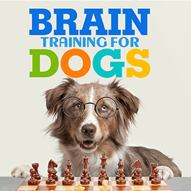 get the best personal dog training classes to eliminate bad behavior in st louis