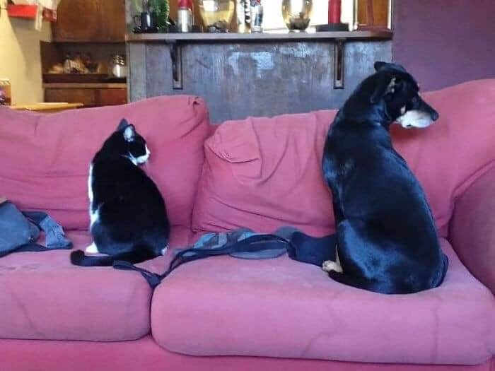 funny twin animals different breed photo