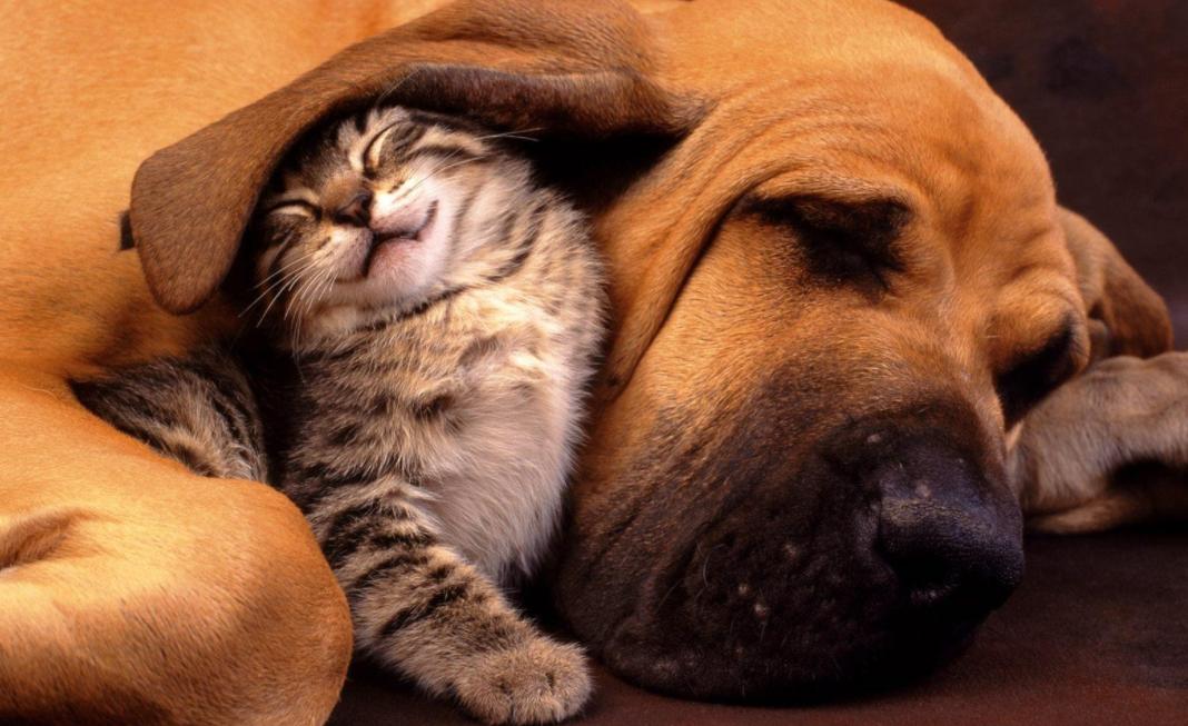 animal friends photos