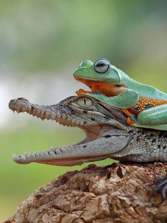 beautiful Animal Friendship Images
