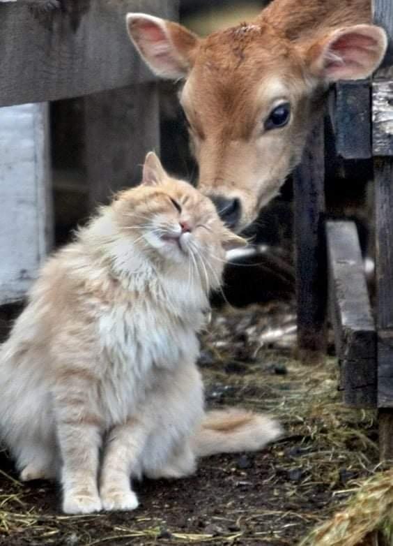Animal Friendship Images