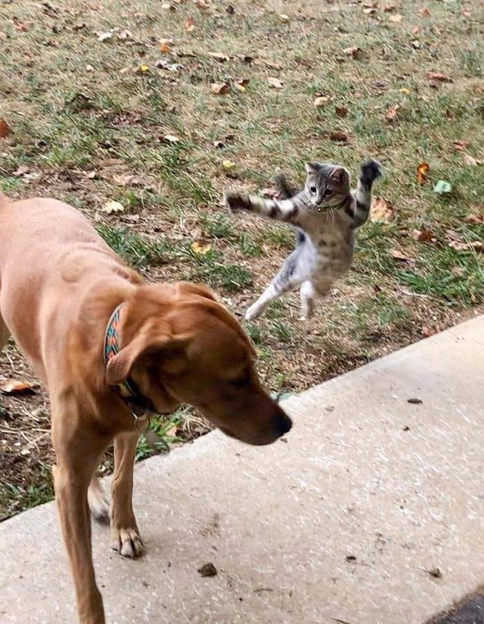 Funny Photos Cats versus Dogs