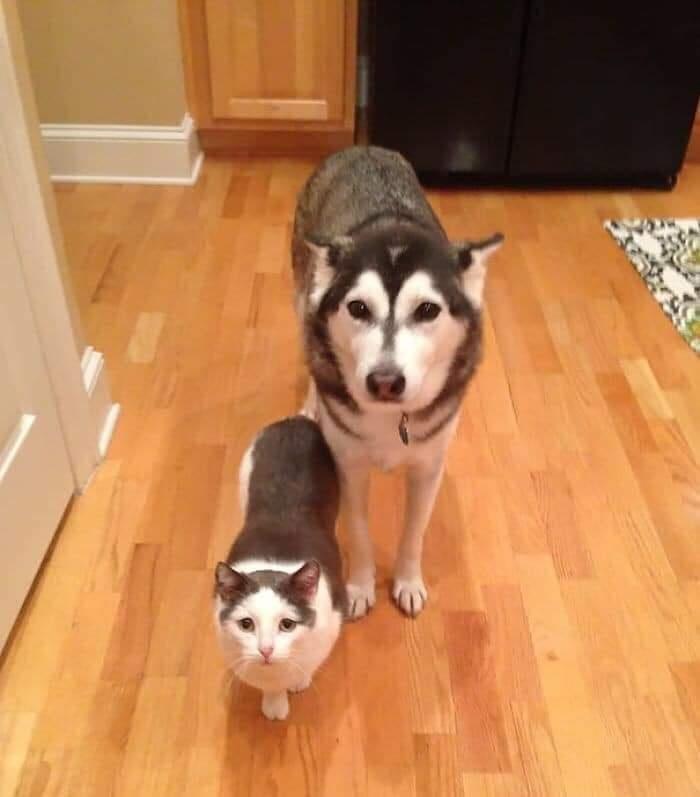 funny twin animals