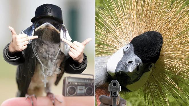 armed animals funny