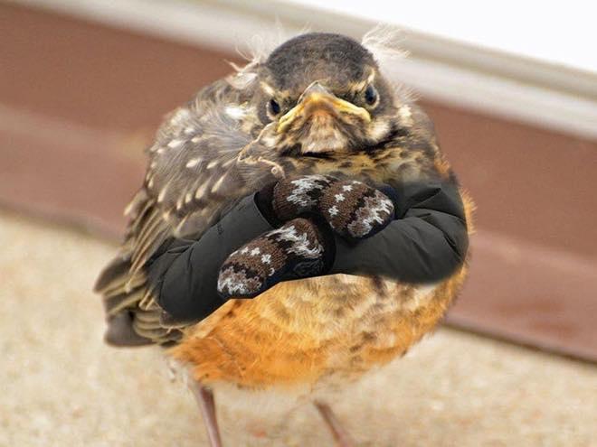 birdie sanders armed animals