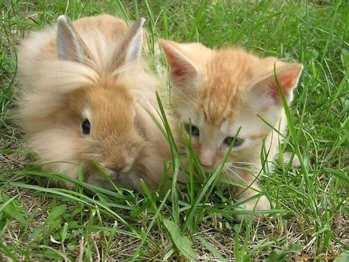 animals look alikes twin photo
