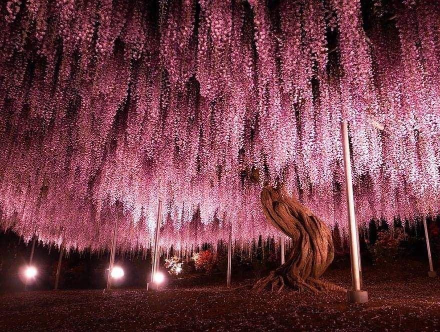 beautiful trees photo