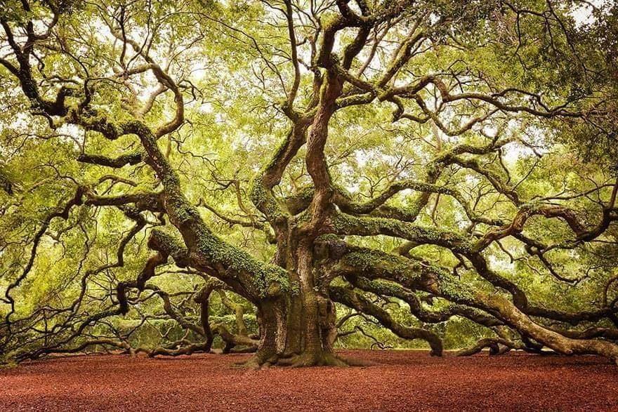 beautiful trees photos